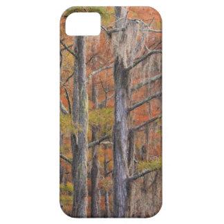 USA, Georgia, George Smith State Park, Cypress iPhone 5 Case