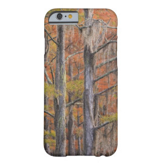 USA, Georgia, George Smith State Park, Cypress Barely There iPhone 6 Case