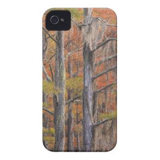 USA, Georgia, George Smith State Park, Cypress Case-Mate iPhone 4 Case