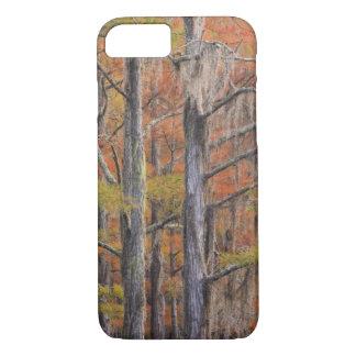 USA, Georgia, George Smith State Park, Cypress iPhone 7 Case