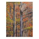 USA, Georgia, George Smith State Park, Cypress Postcard