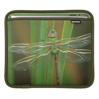 USA, Georgia. Green darner dragonfly on reeds Sleeve For iPads