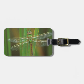 USA, Georgia. Green darner dragonfly on reeds Tag For Luggage