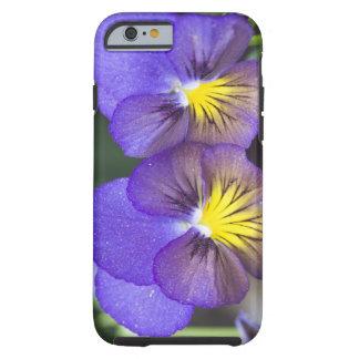 USA, Georgia, Pine Mountain. A closeup of pansy Tough iPhone 6 Case