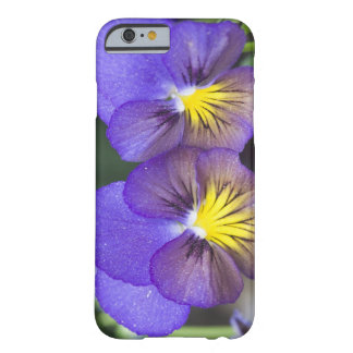 USA, Georgia, Pine Mountain. A closeup of pansy Barely There iPhone 6 Case
