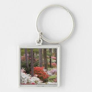 USA, Georgia, Pine Mountain. A forest of Keychain