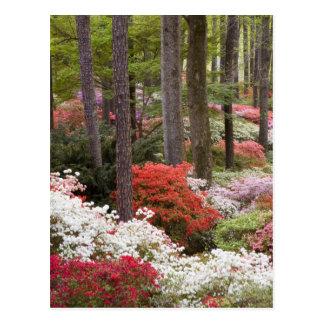 USA, Georgia, Pine Mountain. A forest of Postcard