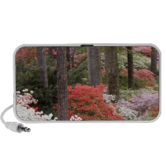 USA, Georgia, Pine Mountain. A forest of iPhone Speaker