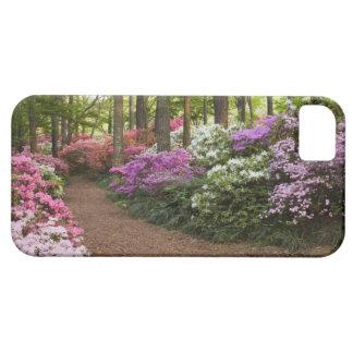 USA, Georgia, Pine Mountain. A pathway through iPhone 5 Cover