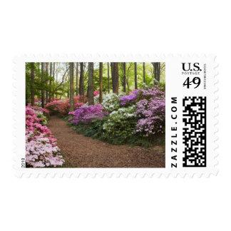 USA, Georgia, Pine Mountain. A pathway through Postage