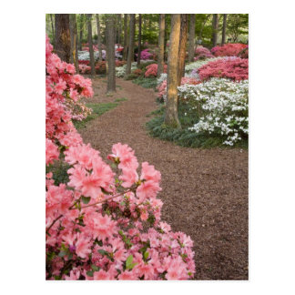USA, Georgia, Pine Mountain. A pathway through Postcard