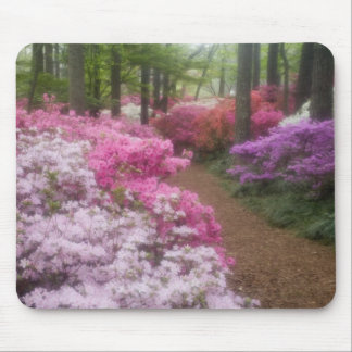 USA; Georgia; Pine Mountain. Azaleas at 2 Mouse Pad