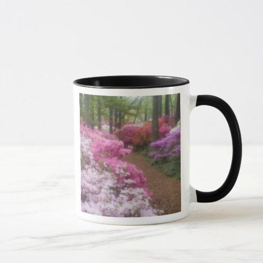USA; Georgia; Pine Mountain. Azaleas at 2 Mug