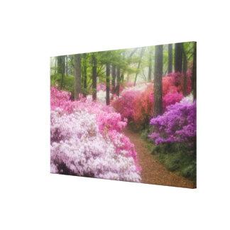 USA; Georgia; Pine Mountain. Azaleas at Canvas Print