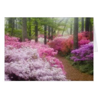USA; Georgia; Pine Mountain. Azaleas at Card