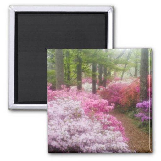 USA; Georgia; Pine Mountain. Azaleas at Fridge Magnets