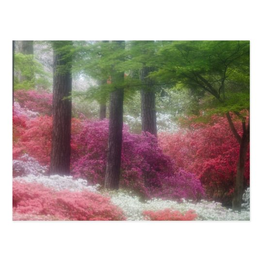 USA; Georgia; Pine mountain. Azaleas at Postcard