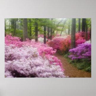 USA; Georgia; Pine Mountain. Azaleas at Poster