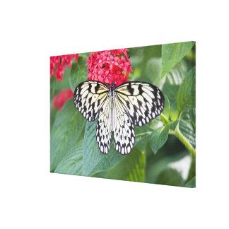USA, Georgia, Pine Mountain. Paper Kite Gallery Wrapped Canvas