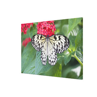 USA, Georgia, Pine Mountain. Paper Kite Canvas Prints