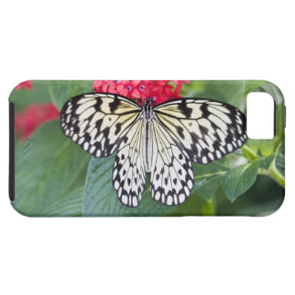 USA, Georgia, Pine Mountain. Paper Kite iPhone 5 Cases