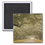 USA, Georgia, Savannah, An oak lined drive in 2 Inch Square Magnet