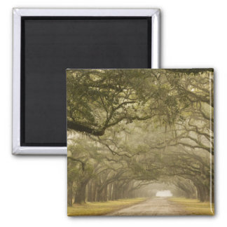USA, Georgia, Savannah, An oak lined drive in 2 Inch Square Magnet