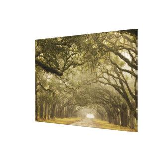USA, Georgia, Savannah, An oak lined drive in Gallery Wrap Canvas