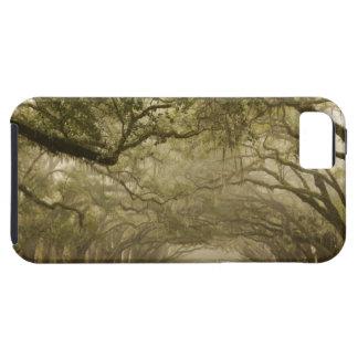USA, Georgia, Savannah, An oak lined drive in iPhone SE/5/5s Case