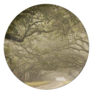 USA, Georgia, Savannah, An oak lined drive in Plate