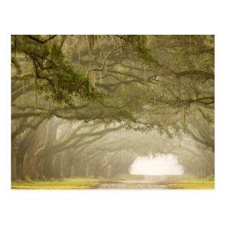 USA, Georgia, Savannah, An oak lined drive in Postcard