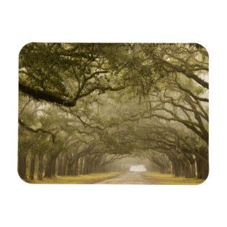 USA, Georgia, Savannah, An oak lined drive in Rectangle Magnet