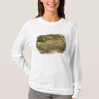 USA, Georgia, Savannah, An oak lined drive in T-Shirt