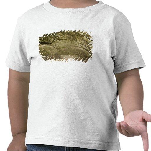 USA, Georgia, Savannah, An oak lined drive in Tshirt