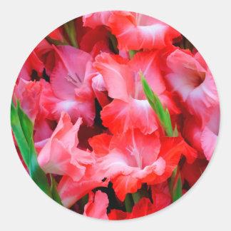 USA, Georgia, Savannah, Bouquet Of Gladiolus Classic Round Sticker