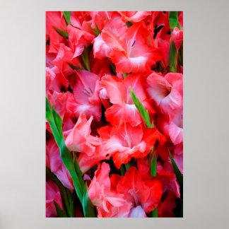 USA, Georgia, Savannah, Bouquet Of Gladiolus Print