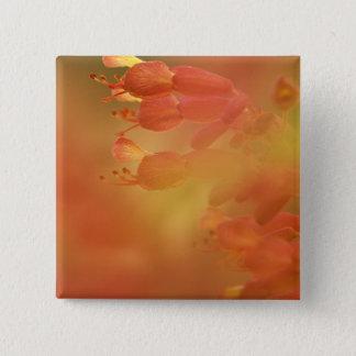 USA Georgia Savannah buckeye flower abstract Button