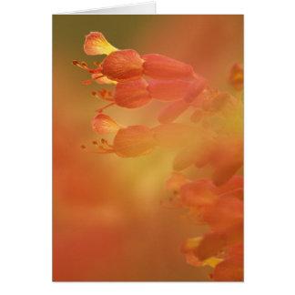 USA Georgia Savannah buckeye flower abstract Card