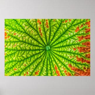 USA, Georgia, Savannah, Close Up Of Lotus Leaf Print