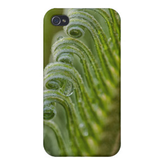 USA, Georgia, Savannah, Close-Up Of New Fronds Cover For iPhone 4