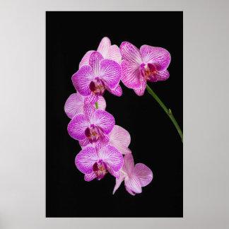 USA, Georgia, Savannah, Cluster Of Orchids 2 Print