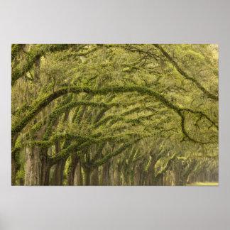 USA; Georgia; Savannah. Oak trees with Poster