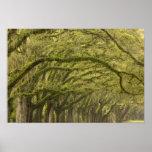 USA; Georgia; Savannah. Oak trees with Print