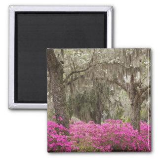 USA, Georgia, Savannah, Spring at Historic 2 Inch Square Magnet