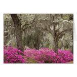 USA, Georgia, Savannah, Spring at Historic Greeting Card
