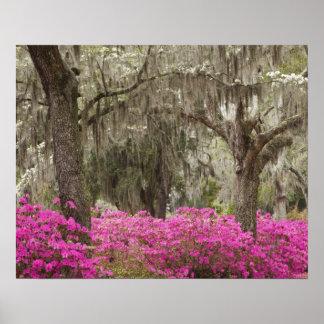 USA, Georgia, Savannah, Spring at Historic Poster