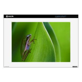 "USA, Georgia, Savannah, Tiny Frog On A Leaf 15"" Laptop Decal"
