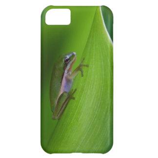 USA, Georgia, Savannah, Tiny Frog On A Leaf Cover For iPhone 5C