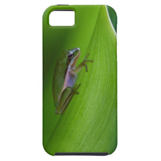 USA, Georgia, Savannah, Tiny Frog On A Leaf iPhone 5 Cover