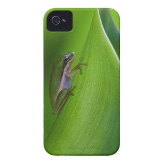 USA, Georgia, Savannah, Tiny Frog On A Leaf iPhone 4 Covers